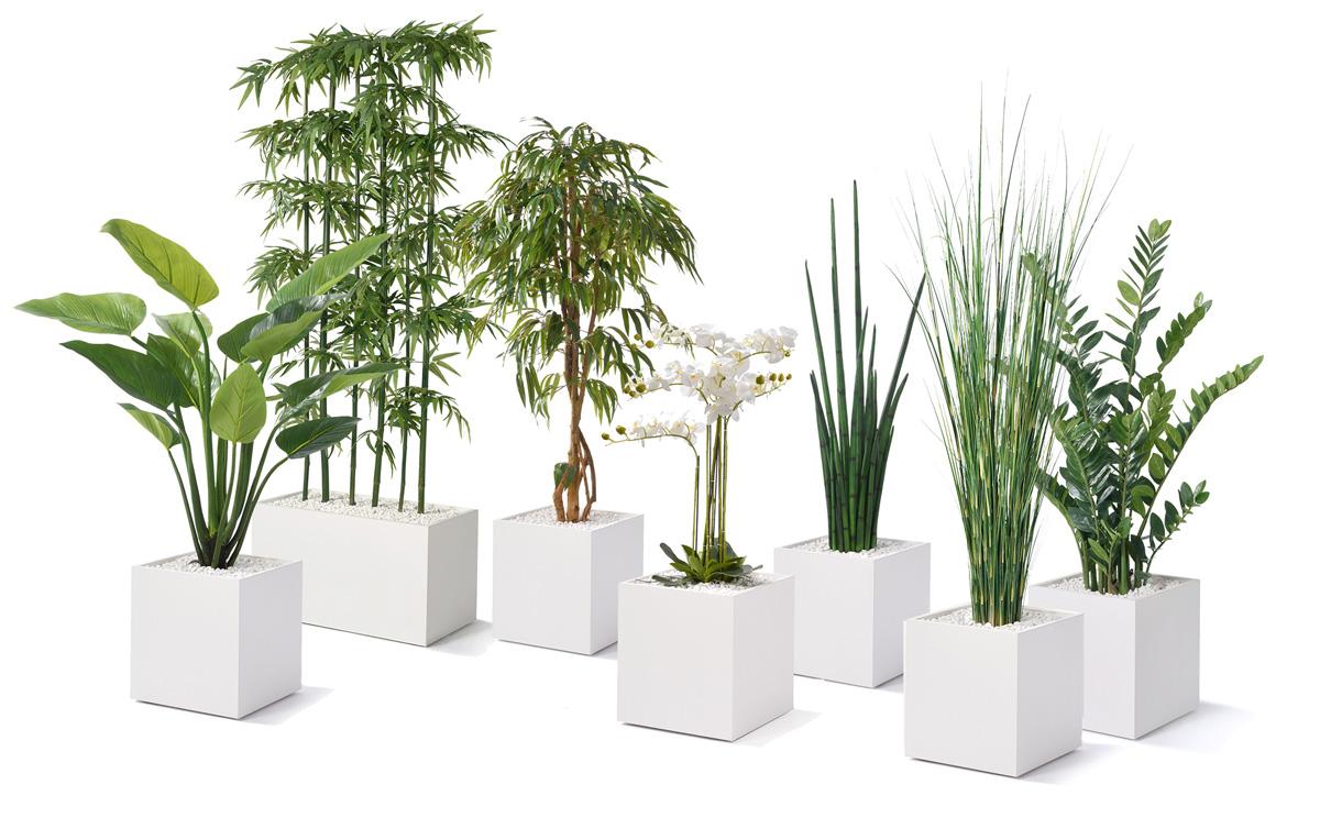 Pflanzen-set-klein